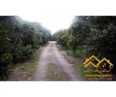 فروش ویژه زمین 2 هکتاری باغ پرتقال با سند ششدانگ و کاربری مسکونی و باغات در رامسر (کد: 2005)